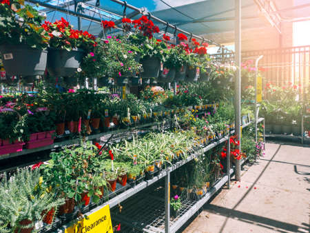 Toronto, Ontario, Canada - June 30, 2019: Garden Centre in Canadian Walmart supermarket store with flowers and plants in pots on shelves.