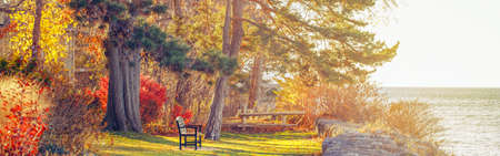 Beautiful autumn fall forest landscape with trees branches and red yellow leaves on the ground. Park with one lonely old bench on bank shore near water lake. Web header banner for website.