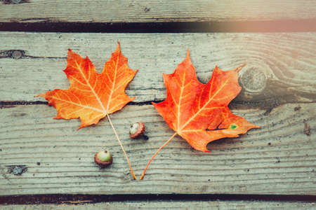 Beautiful natural closeup background with red autumn fall maple leaves and acorns on wooden planks. View from top above with copyspace. Seasonal card wallpaper.