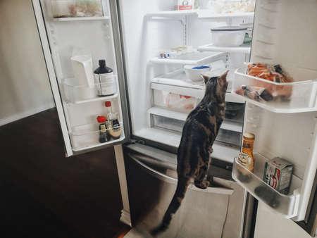 Toronto, Ontario, Canada - 18 septembre 2019 : mignon petit chat tigré rayé drôle assis dans le réfrigérateur à la recherche de nourriture. Accueil animal domestique se comportant mal dans la cuisine.