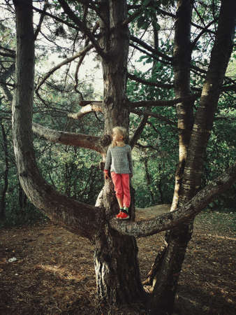 Portrait of cute funny little blonde Caucasian girl standing on large huge giant tree branch at sunset. Active kid playing outdoor in park. Happy authentic childhood lifestyle.