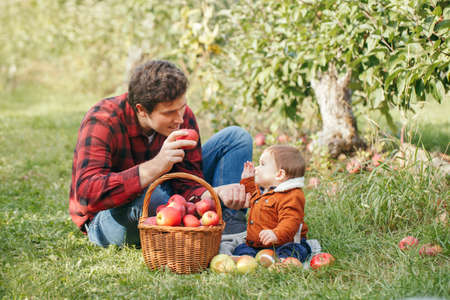 Happy father with baby boy on farm picking apples in wicker basket. Gathering of autumn fall harvest in orchard. Dad feeding son with healthy snack. Seasonal activity hobby.  Foto de archivo