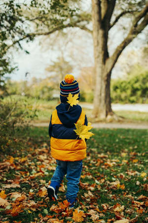 Cute adorable little toddler boy child in jacket and hat walking away in autumn fall park with yellow maple leaves stuck to his back. Kid having fun outdoor. Autumnal seasonal concept.