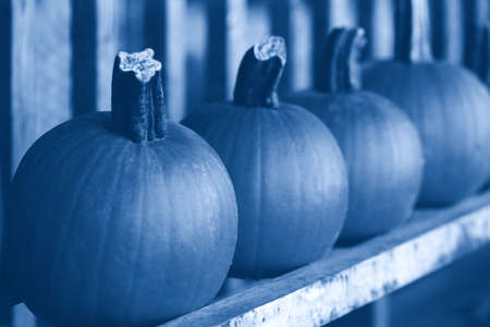 Fresh harvest pumpkins on shelf at farm market. Halloween and Thanksgiving holiday. Natural monochrome food background. Toned with classic blue 2020 year color.
