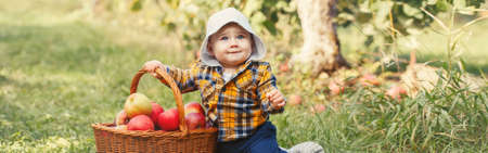 Happy child on farm picking apples in orchard. Cute adorable funny little baby boy in yellow clothes with wicker basket. Kid gathering autumn fall harvest. Web banner header for website. Stock Photo