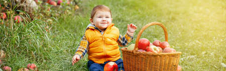Happy child on farm picking apples in orchard. Cute funny little baby boy with wicker basket. Kid gathering autumn fall harvest. Seasonal activity hobby. Web banner header for website.