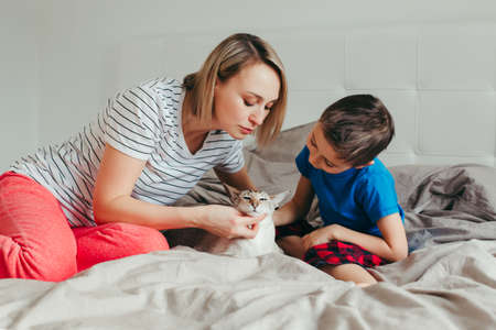 Caucasian mother and son petting oriental point-colored cat. Mom teaching child boy to stroke animal correctly gently. Domestic animal feline friend. Lifestyle candid authentic family moment. Stock fotó