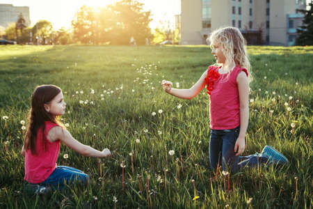 Cute adorable Caucasian girls blowing dandelions. Kids sitting in grass on meadow. Outdoor fun summer seasonal children activity. Friends having fun together. Happy childhood lifestyle. Banque d'images