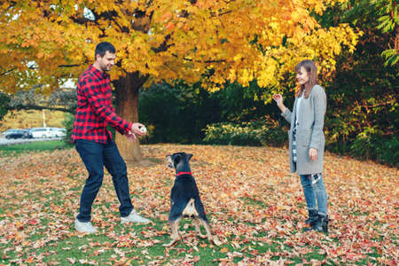 Young couple play ball with dog in park. Man and woman training domestic pet outdoor on autumn fall day. Family authentic lifestyle activity. Love and friendship of animal and human.