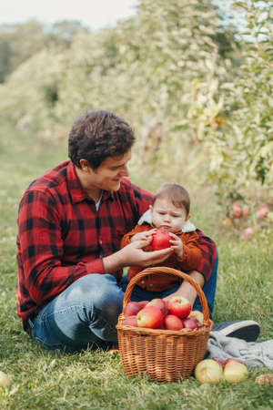 Happy father with baby boy on farm picking apples in wicker basket. Gathering of autumn fall harvest in orchard. Dad feeding son with healthy snack. Seasonal activity hobby.