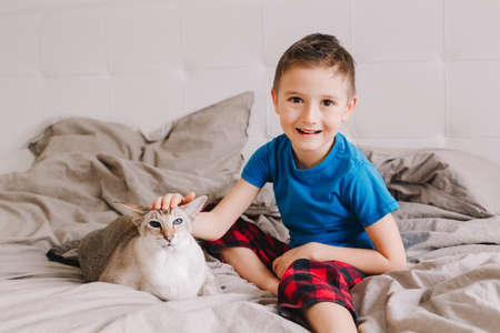 Caucasian boy petting oriental cat. Kid sitting on bed in bedroom at home and stroking domestic animal friend. Child with furry feline animal. Cute candid lifestyle childhood moment.