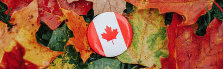 Round badge Canadian flag. National symbol lying on ground in autumn fall maple leaves. Canada Day celebration. Thanksgiving autumnal holiday in Canada. Web banner header.