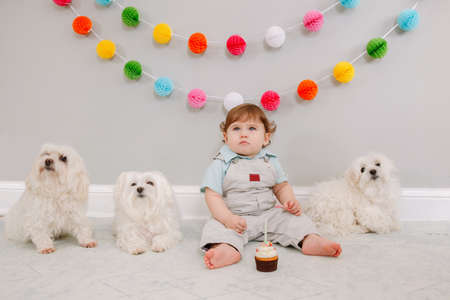 Happy cute Caucasian baby boy celebrating first birthday at home. Child kid toddler sitting on floor with three white pet dogs friends. Holiday cupcake dessert. Happy birthday concept. Imagens