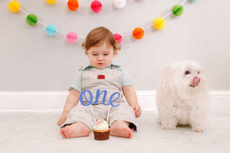 Happy surprised cute Caucasian baby boy celebrating his first birthday at home. Child kid sitting on floor with pet dog. Tasty cupcake dessert with cake topper word one. Happy birthday concept.