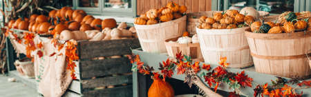 Colorful pumpkins in baskets by store on farm. Autumn fall harvest. Thanksgiving and Halloween holiday preparations. Colorful fresh seasonal vegetables. Web banner header.