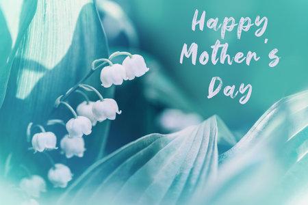 母亲节快乐的节日贺卡与问候文字。美丽的白色柔嫩的小百合盛开的山谷花与绿色的叶子。宏特写自然。五月春暖花开户外。