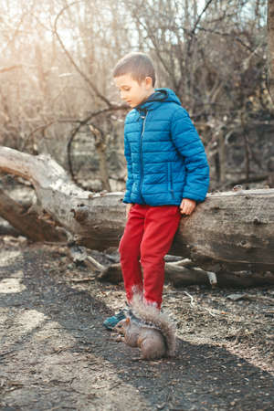Cute Caucasian boy feeding grey squirrel in park. Adorable little kid giving food nuts to wild animal in forest. Child learning studying wild nature and making animal friend. Outdoors activity. Standard-Bild