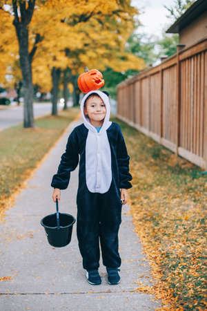 Trick or treat. Happy child boy with red pumpkin on head. Kid going to trick or treat on Halloween holiday. Cute boy in party panda costume with basket going to neighbour house for candies and treats