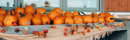 Thanksgiving and Halloween holiday preparations. Red orange pumpkins on shelf at farm. Autumn fall harvest. Store outdoor decoration. Fresh seasonal vegetables outdoor. Web banner header.