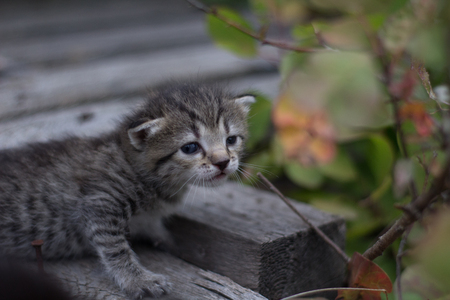 kitten close up background.
