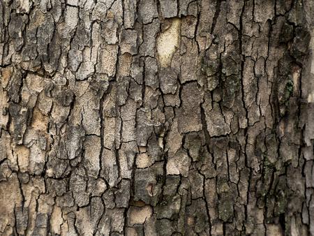 Bark texture background. Stock Photo