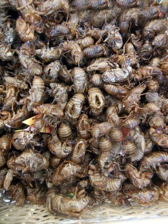 Cast-off skins of cicada