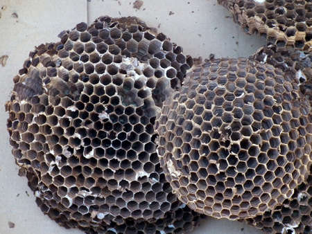 beehive: Beehive Stock Photo