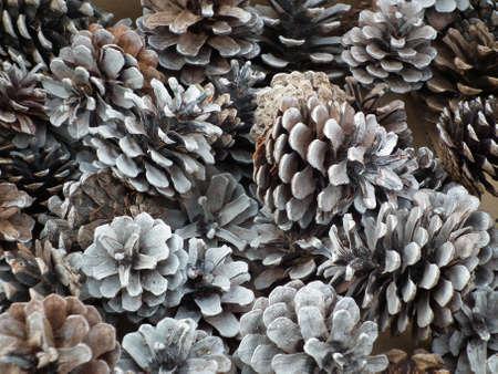 pinecones: collection of pinecones