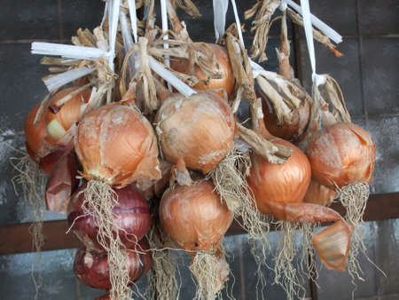 hung onions Stock Photo