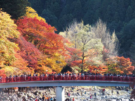 viewing of maples in central Japan Korankei Aichi