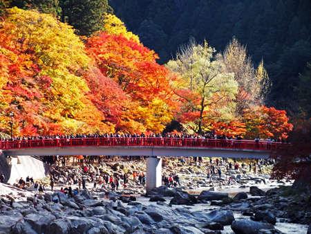 秋の紅葉 報道画像