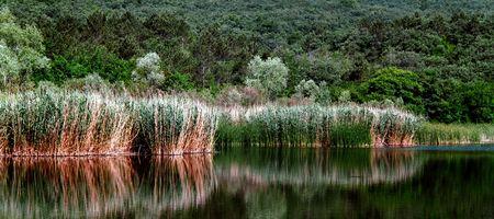 panoramic photo nature wood lake Stock Photo