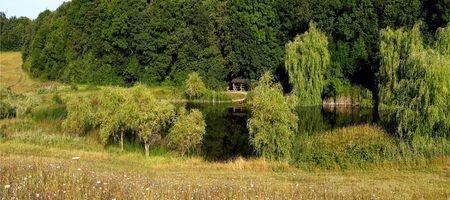 divergence: panoramic photo nature wood lake Stock Photo