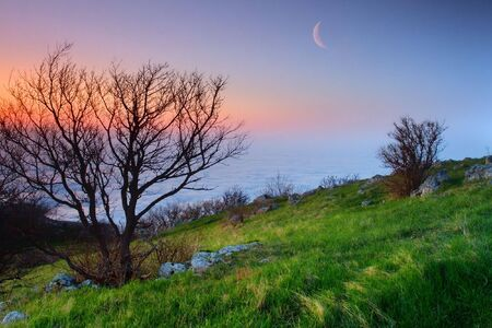 simple nature on a moon background Stock Photo - 555956