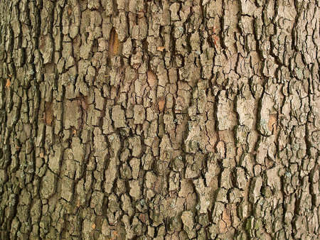 Natural texture of a bark of a tree