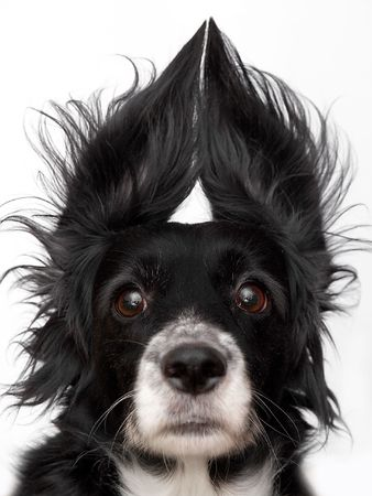 this is a black dog on a white background Stock Photo - 563114