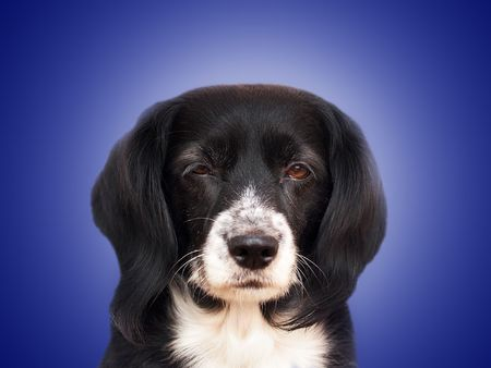 this is a black dog on a white background Stock Photo - 563113
