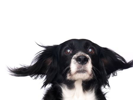 this is a black dog on a white background Stock Photo - 563112