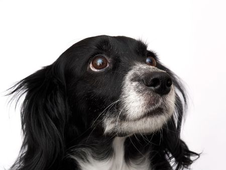 this is a black dog on a white background Stock Photo - 563106
