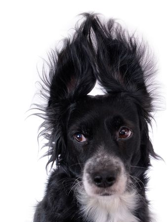 this is a black dog on a white background photo