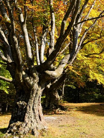 In this photo the beautiful autumn wood is shown Stock Photo - 598844