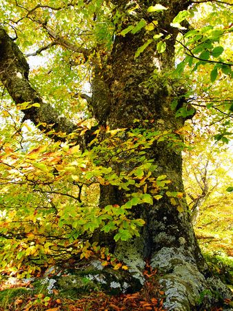 In this photo the beautiful autumn wood is shown Stock Photo - 598841