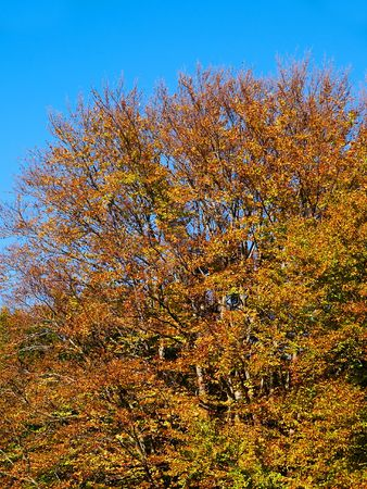 In this photo the beautiful autumn wood is shown Stock Photo - 598840