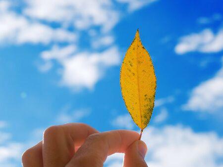 caes: La persona que tiene en una mano una hoja en un fondo de nubes y el cielo  Foto de archivo