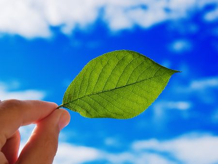 The person holds in a hand a leaf on a background of the cloudy sky photo