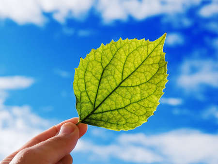 The person holds in a hand a leaf on a background of the cloudy sky Stock Photo - 601341