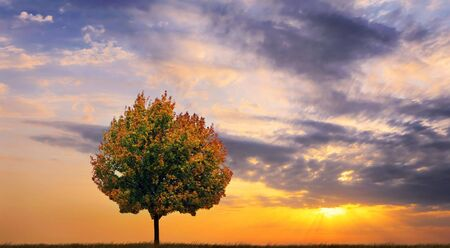 Autumn tree on a background of a beautiful decline Imagens - 603663