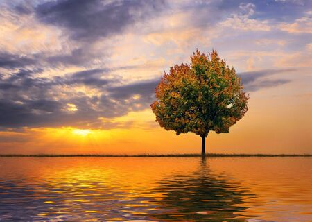 Autumn tree on a background of a beautiful decline Imagens - 603664