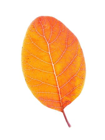 autumn leaves on a white background Imagens
