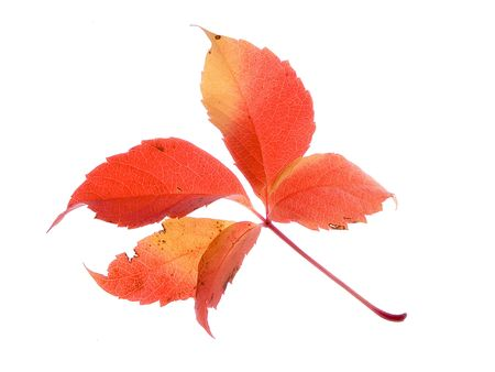 autumn leaves on a white background Imagens - 603701